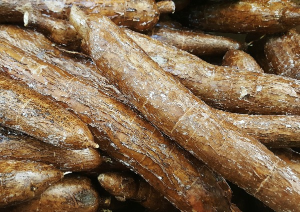 African Cassava Yuka Root